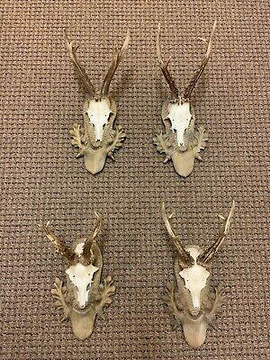 4 Antique Black forest ANTLERS handcarved plate taxidermy stag horn deer