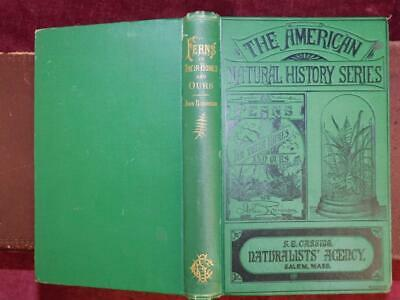 FERNS in their HOMES & OURS by JOHN ROBINSON/22 PICTURES/BOTANY/SCARCE 1878 1st