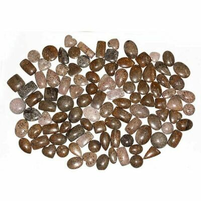 100Cts Natural Dinosaur Bone Mix Cabochon Loose Gemstone Bulk Lot Christmas Sale