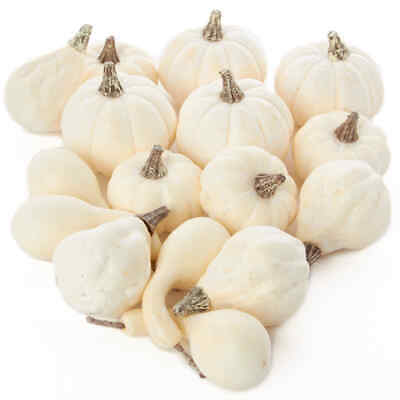 Factory Direct Craft 16 Assorted Harvest Off White Artificial Gourds and Pumpkin
