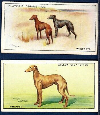 DOGS Trade Cards ~ WHIPPETS ~ Early