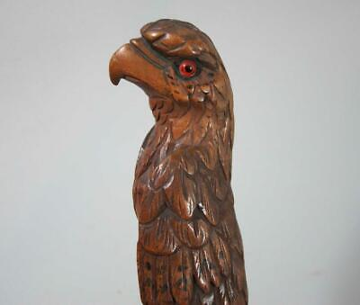BEST BEAUTIFUL ANTIQUE CARVED WOOD PARROT WALKING STICK HANDLE 1900 cane
