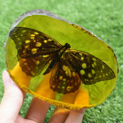 Chinese Collectible Rare Amber Inner Inlay Butterfly True Insect Specimens 159G