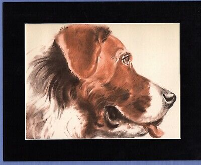 DIANA THORNE ~ ST. SAINT BERNARD ~ ANTIQUE DOG PRINT 1930/40s Mounted #1