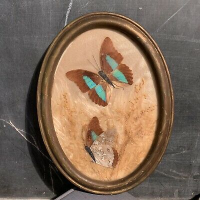 Vintage Real Mounted 2 Butterflies in Beautiful Oval Wood Frame