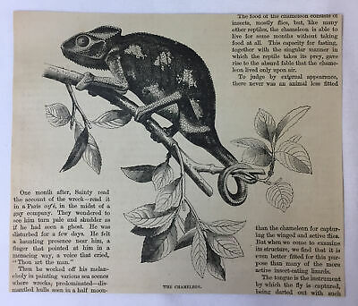 1877 magazine engraving~ THE CHAMELEON