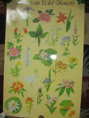 Vintage  Laminated  American Wild Flowers Poster by Susan David 1985 Dover Pub.