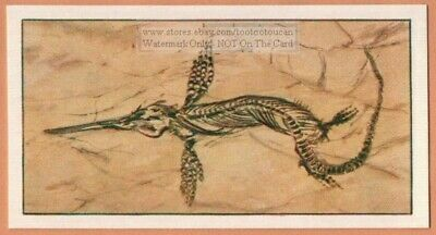 Fossil Of Fish-Lizard From Lyme Regis England Vintage Trade Ad Card