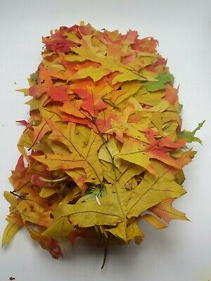 REAL AUTUMN FOLIAGE LEAVES Oak Fall Colors treated branches