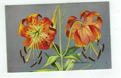 Antique Artist Signed 1957 NWF Post Card Lilies signed Peterson