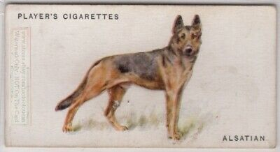 Alsatian German Shepherd Police Dog Canine Pet 1920s  Ad Trade Card