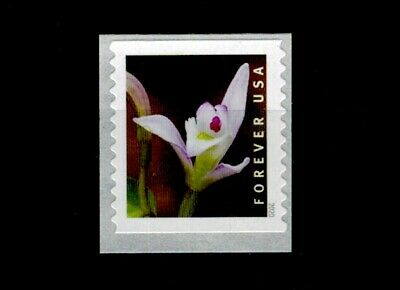 US 2020 Wild Orchids Single Stamp MNH From 3K Coil, Triphora Trianthophora