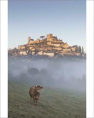 "10""x8"" (25x20cm) Print A cow stands in front of the hilltop villa..."
