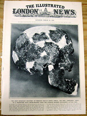 1929 illustrated newspaper ARCHEOLOGY FOSSIL new SOUTH AFRICAN human skull found