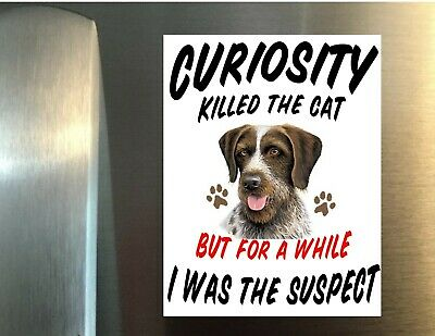 MAGNET - Perfect for Fridge Curiosity Killed The Cat GERMAN WIREHAIR POINTER DOG