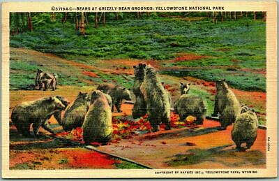 "1940s YELLOWSTONE NATIONAL PARK Postcard ""Bears at Grizzly Bear Grounds"" Linen"