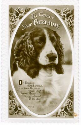 Old RARE Dog Postcard English Springer Spaniel Embossed Postcard England