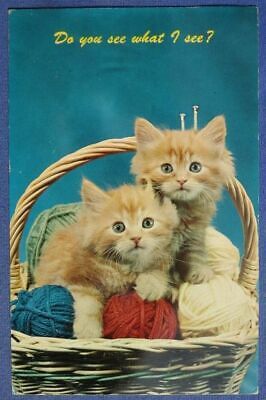 Kittens In Basket Do You See What I See Cat Postcard