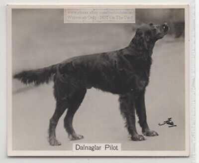Gordon Setter 1930s Champion  Dog Breed Canine Pet Ad Trade Card