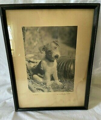 Vintage Framed Print So What by H. Armstrong Roberts  Cute Terrier Puppy