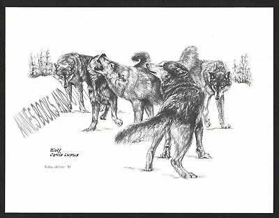 #322 WOLF PACK *  Wildlife art print Pen and ink drawing by Jan Jellins