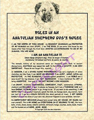 Rules In An Anatolian Shepherd Dog's House