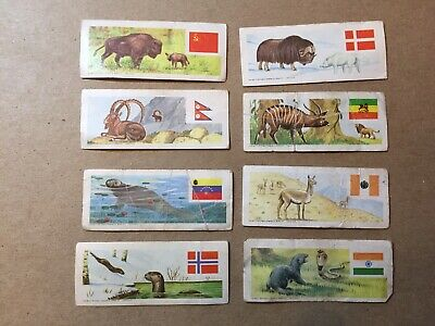 1965 SUGAR DADDY LOT  ANIMALS And FLAGS Of The World 8 Cards Series 3