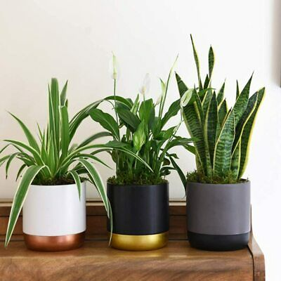 Air Purifying House Plants With Modern Ceramic Pots Indoor 3 6 X 12cm Pots T M 34 99 Picclick Uk