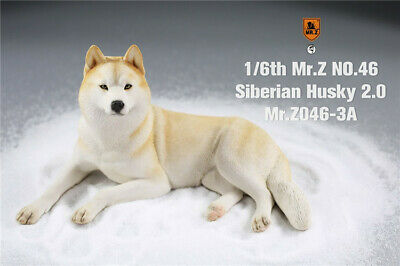 Presale Mr.Z 1//6 MRZ046 Siberian Husky 2.0 NO.46 Dog Resin Animal Statue Toys