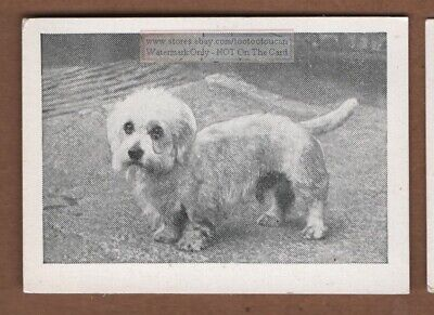 Dandy Dinmont Terrier Dog Canine Pet 1950s Ad Trade Card