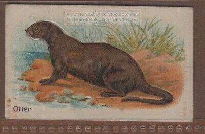 River Otter with Pop-Up Image 1920s Trade Ad Card