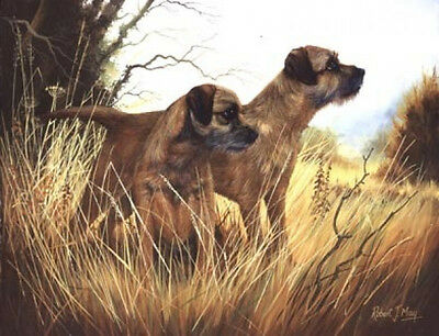 Robert J. May Open Edition Print - Border Terrier 9
