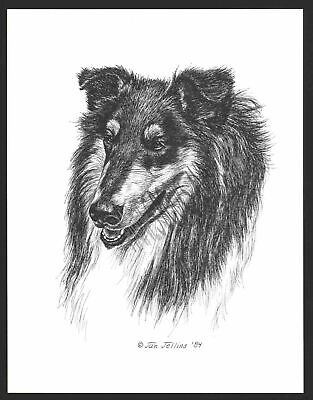 #331 TRI COLOR COLLIE portrait dog art print * Pen and ink drawing * Jan Jellins