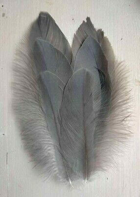 Fly tying Grey Junglefowl small breast feathers art Native crafts