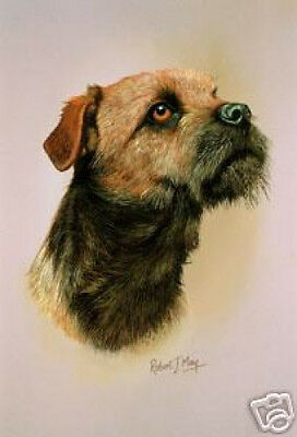 Robert J. May Head Study - Border Terrier (RMDH023)