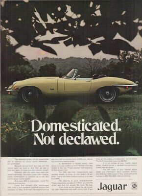 Domesticated. Not declawed. Jaguar XKE ad 1971 NY