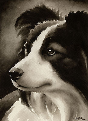 BORDER COLLIE Watercolor Dog ART PRINT Signed by Artist DJR