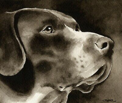GERMAN SHORTHAIRED POINTER Watercolor Dog 11 x 14 ART PRINT Signed by Artist DJR