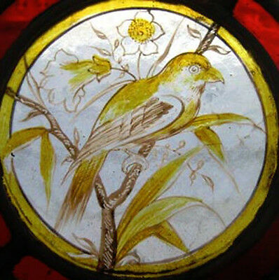 Rare Victorian Painted Golden Bird English Antique Stained Glass Window