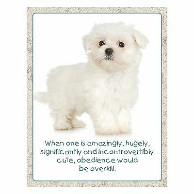 Maltese Puppy New Fridge Magnet Obedience Is Overkill