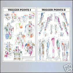Massage Therapy Supplies Trigger Point Chart Set, Lam.