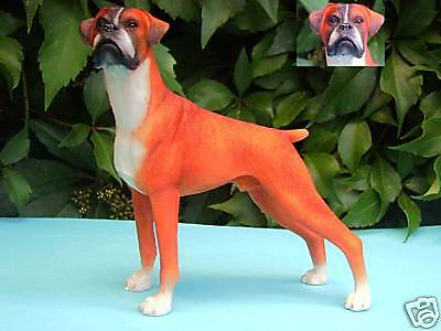 DEUTSCH BOXER - Red / White - Deutscher Boxer Hund
