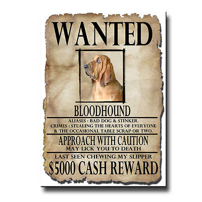 BLOODHOUND Wanted Poster FRIDGE MAGNET New DOG Funny