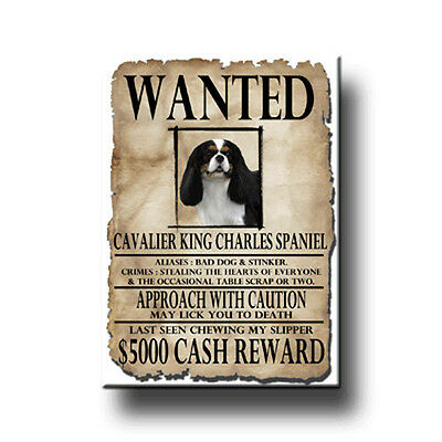 CAVALIER KING CHARLES SPANIEL Wanted Poster FRIDGE MAGNET No 1
