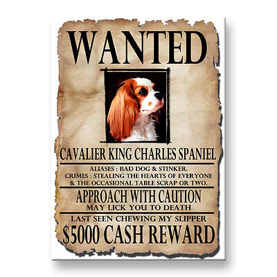 CAVALIER KING CHARLES SPANIEL Wanted Poster FRIDGE MAGNET No 2