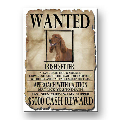 IRISH SETTER Wanted Poster FRIDGE MAGNET New DOG