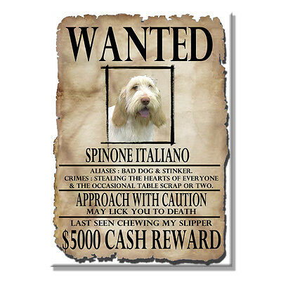 ITALIAN SPINONE Wanted Poster FRIDGE MAGNET No 1 DOG