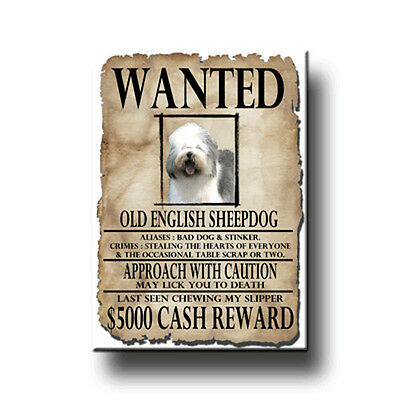 OLD ENGLISH SHEEPDOG Wanted Poster FRIDGE MAGNET Dog