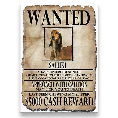 SALUKI Wanted Poster FRIDGE MAGNET New DOG Funny