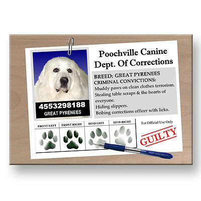 GREAT PYRENEES Rap Sheet FRIDGE MAGNET New DOG Funny